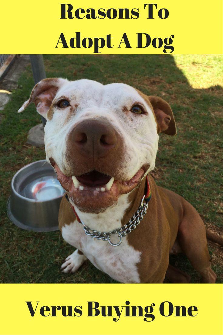 259 best pet adoption tips and information images on pinterest pet adoption animal rescue and. Black Bedroom Furniture Sets. Home Design Ideas