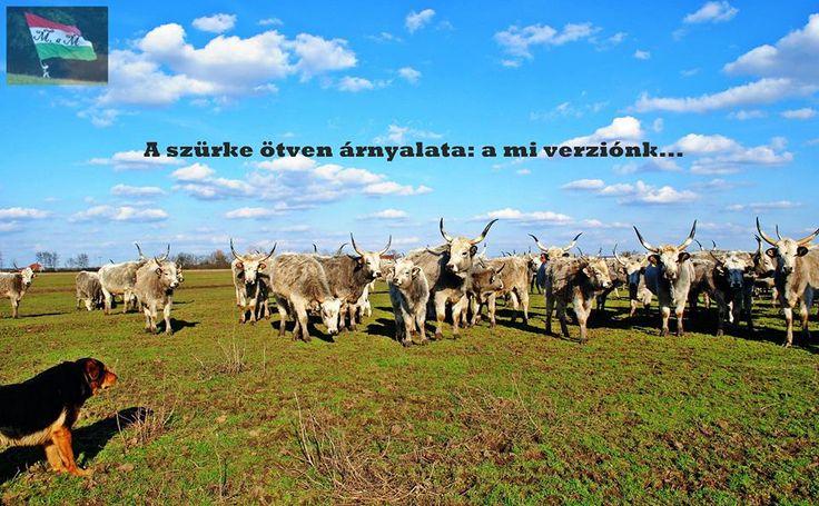 https://www.facebook.com/Mindenamimagyar/photos Hungary