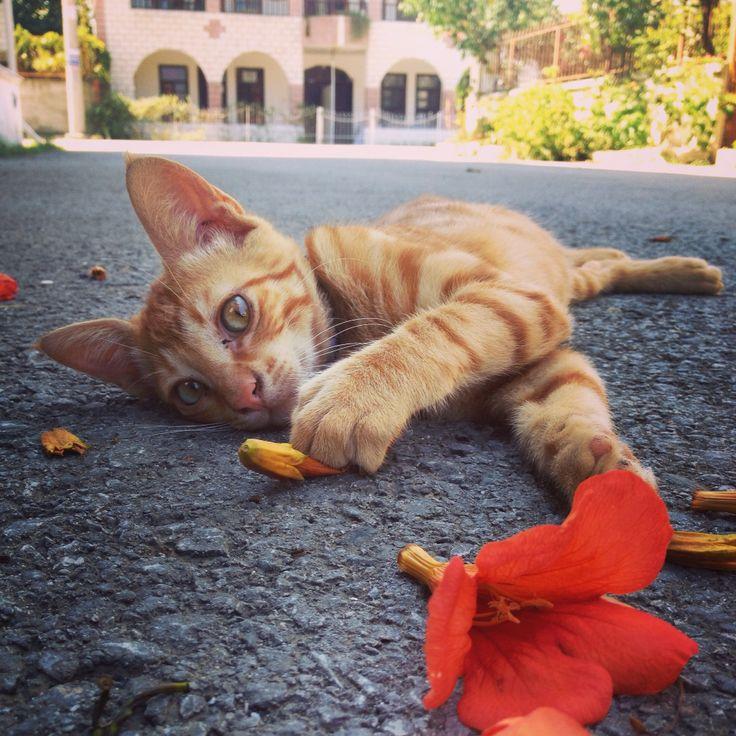 Kedi#cat