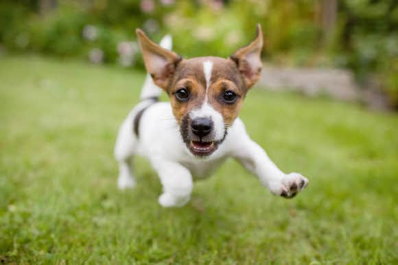 Top Dog Friendly Places In Perth Dogs And Puppies Dog Friends