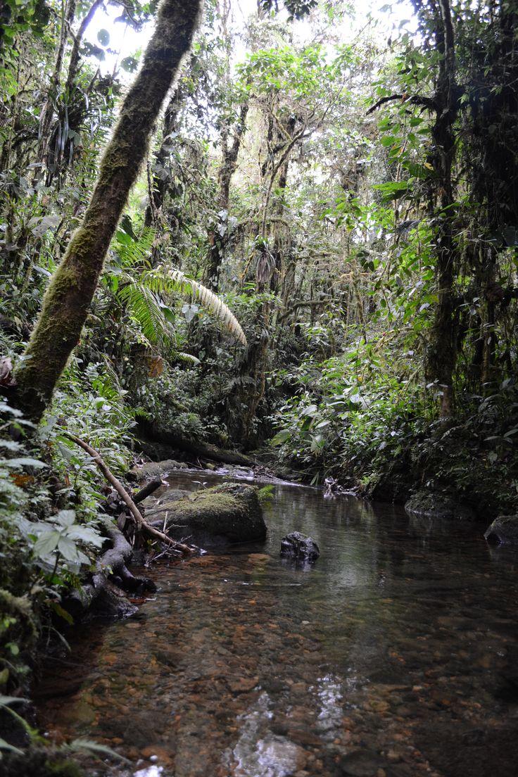 Agua cristalina en estado natural