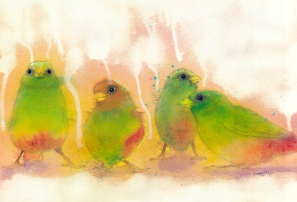 brusho birds
