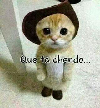 219 besten I Love Cat\'s ♥♥♥ Bilder auf Pinterest | Kätzchen ...