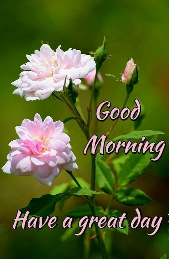 Good Morning Images Special Good Morning Good Morning Quotes Good Morning Flowers Gif