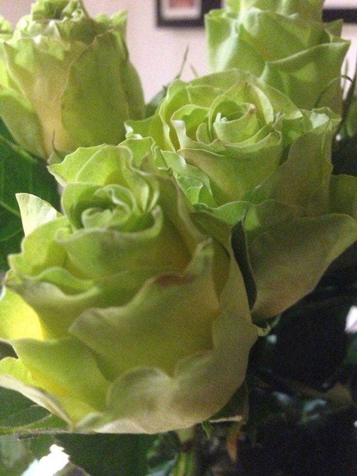 Vihreitä ja vakoisia kukkia pitää olla aina