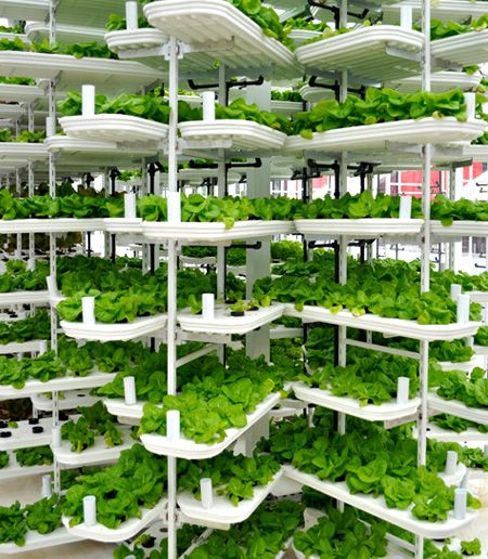 vegetables growing in a VertiCrop installationVertical Farms, Buildings North, Vertical Urban, Parks Lot, North America, Modern Sustainable, Urban Farms, Gardens Book, Sustainable Gardens