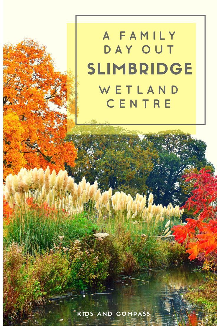 Discover beautiful migrating birds here at Slimbridge Wetland Centre, Gloucestershire, UK.  The kids will love feeding the ducks and meeting the resident flamingos!