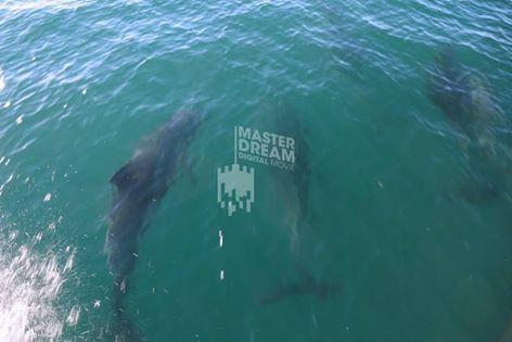 As águas da costa algarvia são o lar de algumas espécies de golfinhos. /  The waters of Algarve's coast are the home of some species of dolphins