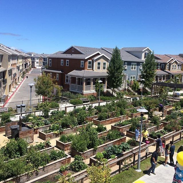 birds eye view of our community garden project at the bay meadows development in san mateo