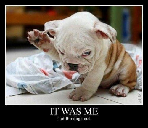 It was me :D ...: Bulldogs Puppies, Funny Dogs, So Cute, English Bulldogs, Things,  Clumber Spaniels, Dr. Who, Animal, Socute
