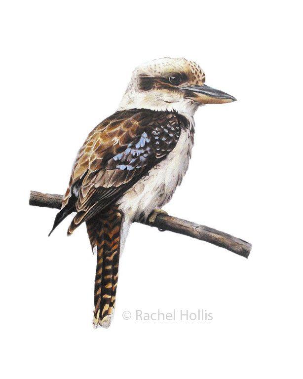 Bird Print - bird art - Kookaburra print by RachelHollisArt on Etsy https://www.etsy.com/listing/252913957/bird-print-bird-art-kookaburra-print