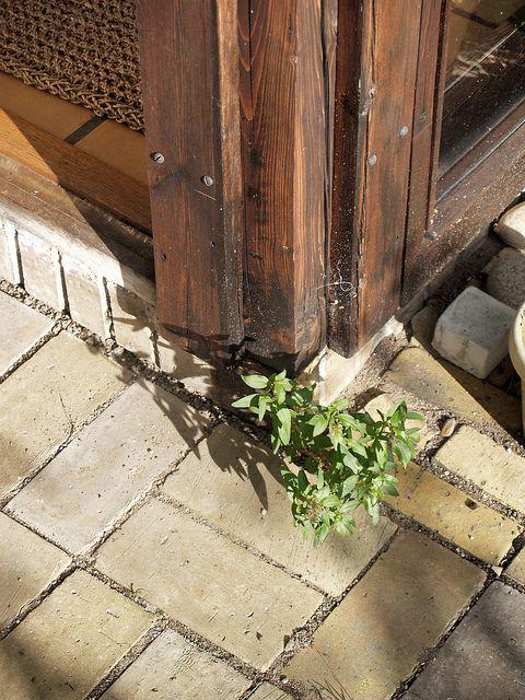 jørn utzon, architect: kingohusene courtyard houses, helsingør 1956-1960. corner detail. | Flickr – Compartilhamento de fotos!