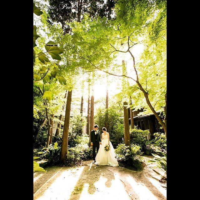 【masa03_photo】さんのInstagramをピンしています。 《あったかい光と寄り添う影。いつまでもお幸せに😊#photicpeer #ナンザンハウス #ウェディングフォト #ウェディングドレス #ウェディング #ロケーションフォト #ヘアメイク #前撮り #bridal #ブライダル #名古屋 #tokyocameraclub #thetreatdressing #プレ花嫁 #花嫁 #東海プレ花嫁 #結婚 #結婚式 #instagood #instadaily #instagram #wedding #weddingdress #weddingphotography#光#森#photowedding#portrait#ポートレート#カメラ女子》