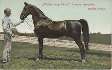 American Saddlebred stallion Montgomery Chief was a full brother to Bourbon King.