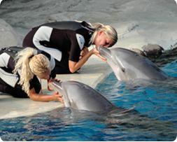 Addestratore di delfini per un giorno su www.degustiblog.it