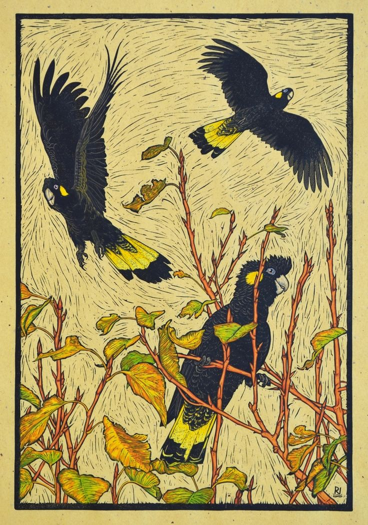 Three Yellow-tailed black Cockatoos (hand coloured version) 53.5 x 36.5 cm edition of 50 Hand coloured linocut on handmade Japanese paper $800