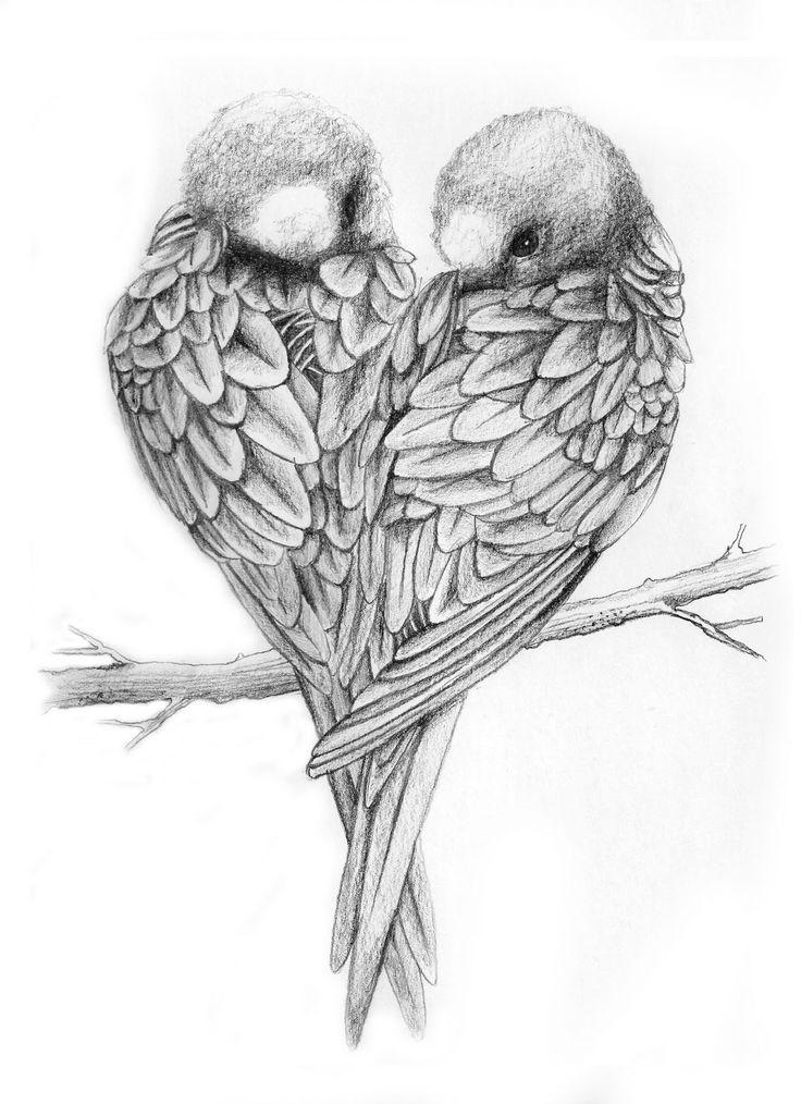 Drawings of Love Birds | Love Birds Drawing Love birds ...