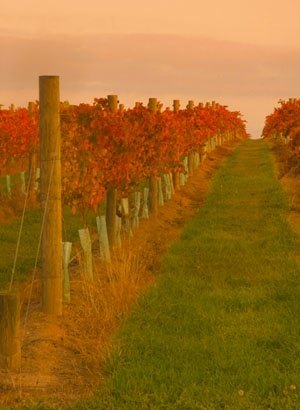 Yarra Valley Wine Tours in the Yarra Valley