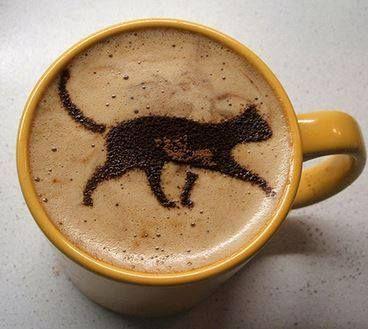 #cafe #gatos #miau www.xtremonline.com