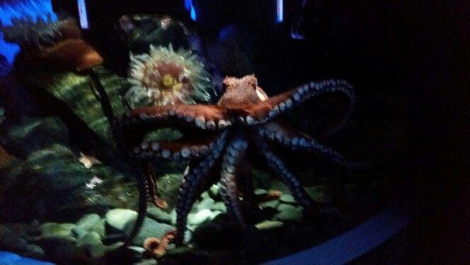 #aquarium | Animals, Pigeon forge, Aquarium