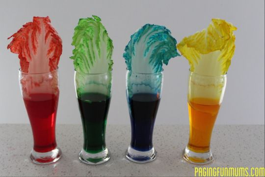 This colorful experiment is a great way to illustrate how plants absorb water!
