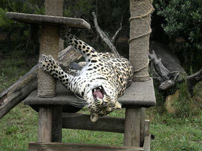 """""""ZweLakhe"""" is having a real chilled day today..."""
