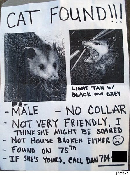That is one pissed off cat/possum Signs that amuse me