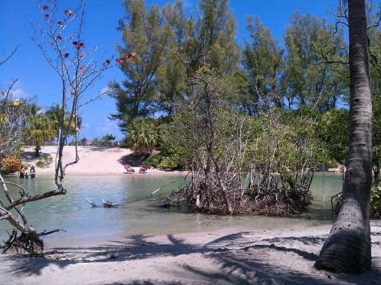 DuBois Park  Jupiter, Florida  Shady area under palm trees