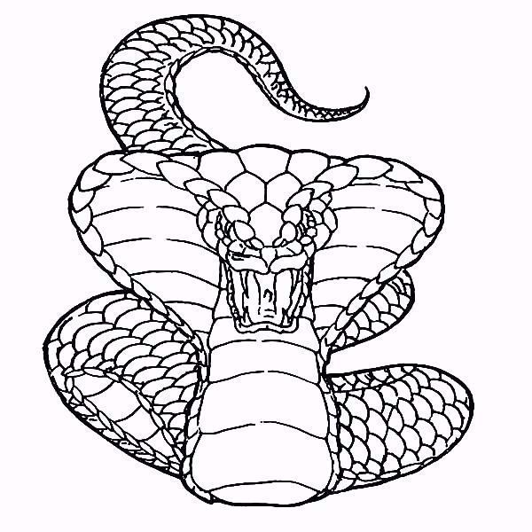 King Cobra Coloring Page Lovely Realistic Snake Drawing At Getdrawings In 2020 Snake Coloring Pages Snake Drawing Animal Coloring Pages