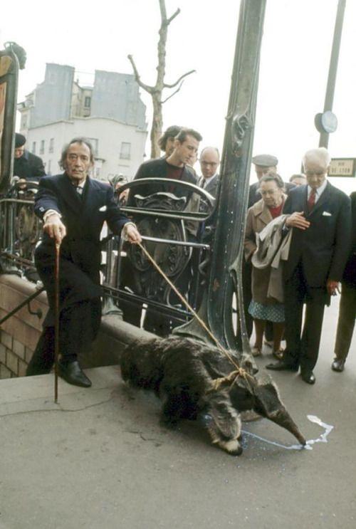 picsofhistory:History_Pics: Salvador Dalí tomando sus osos hormigueros a dar un paseo en París, 1969. http://pic.twitter.com/cQoH3qkwJ8