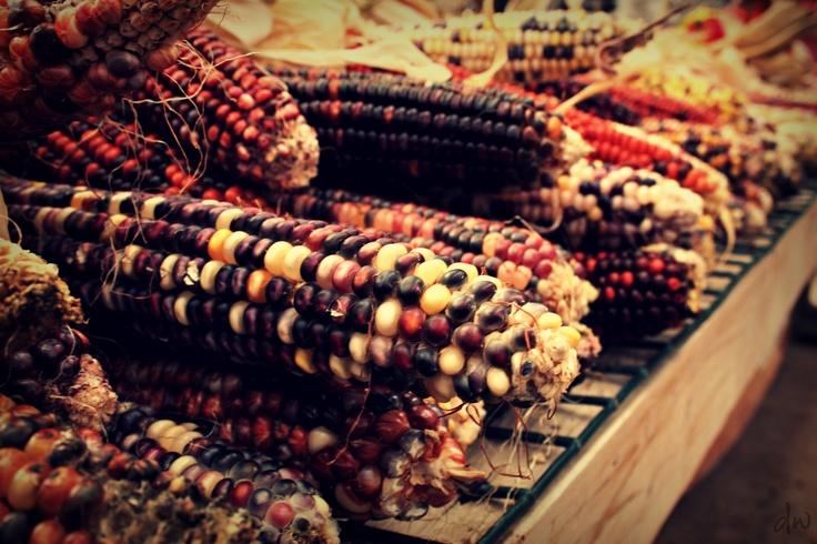 #Corn #Fall2012