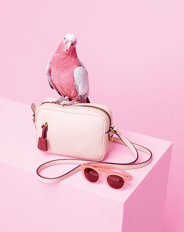 Everybody's squawking about our totally customizable Signet bag—now in soft blossom. Make it your own at jcrew.com/yourbag.