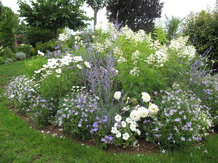 Садовые гортензии обзор лучших сортов