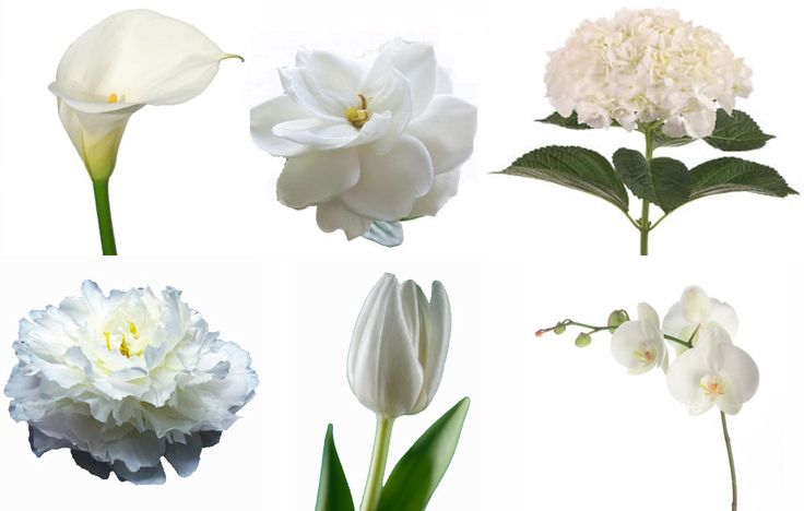Looking For Alaska Flower: 78+ Ideas About White Flowers Names On Pinterest