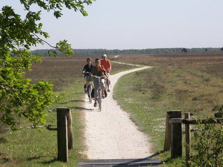 In 1991 is het Dwingelderveld ingesteld als Nationaal Park. Het gebied is het grootste aaneengesloten natte heidegebied van het land. Dat was een van de belangrijkste redenen om het gebied aan te wijzen als Nationaal Park. In het gebied komen veel bedreigde planten- en diersoorten voor.