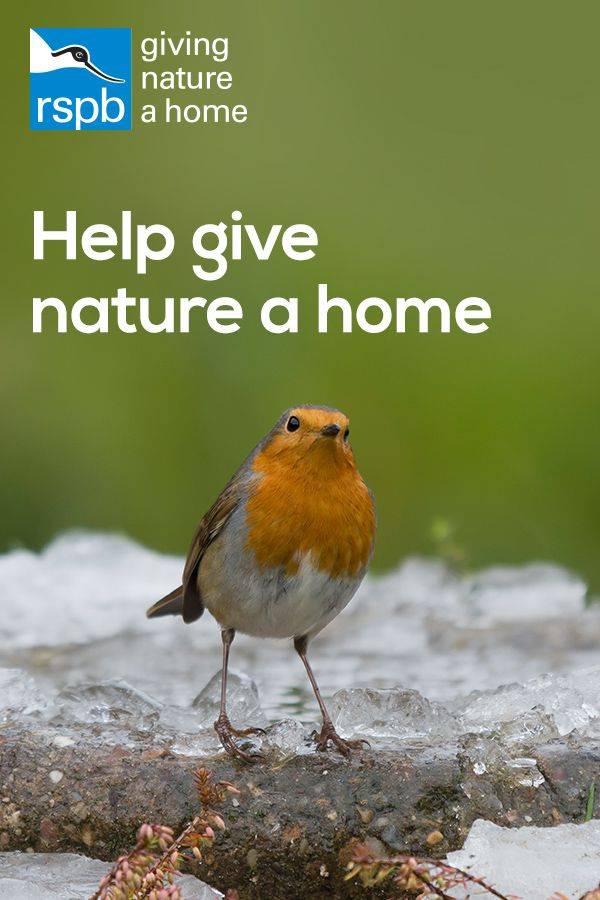 Become An RSPB Member And Help Give Nature The Home It Needs