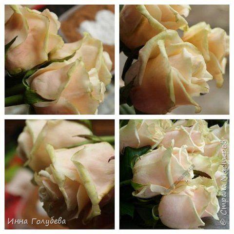 И снова всем привет,и снова я с розами, но в этот раз сорт Талея. Заодно и процесс отфоткала) Листики на фото живые. Свои еще не одела в них) фото 16