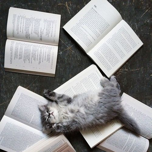 two favorite things...books & cats