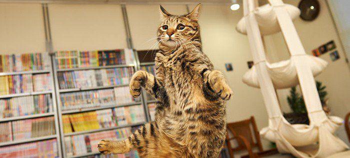 17 gatos que saltan como si fueran auténticos ninjas - http://viral.red/17-gatos-que-saltan-como-si-fueran-autenticos-ninjas/