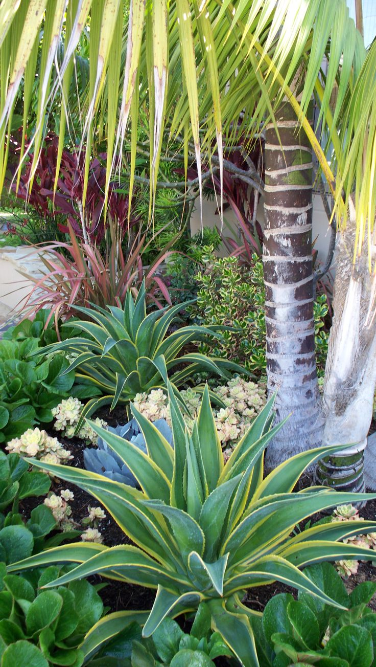 1000 Ideas About Palm Trees Landscaping On Pinterest Florida