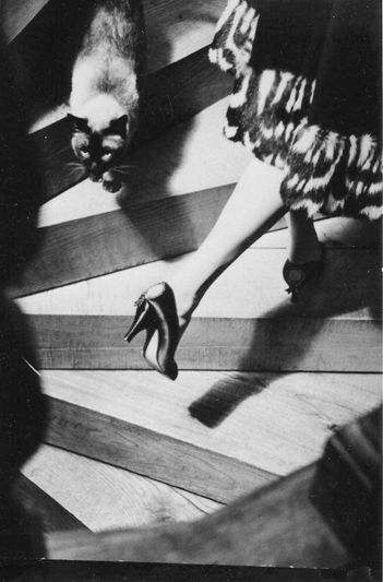 by Frances Pellegrini: 1950S Beautiful, Cat, Frances Pellegrini, France Pellegrini, Art, Kitty Kitty, 1950 S Photographers, Fashion Photography, Blackandwhit Photography