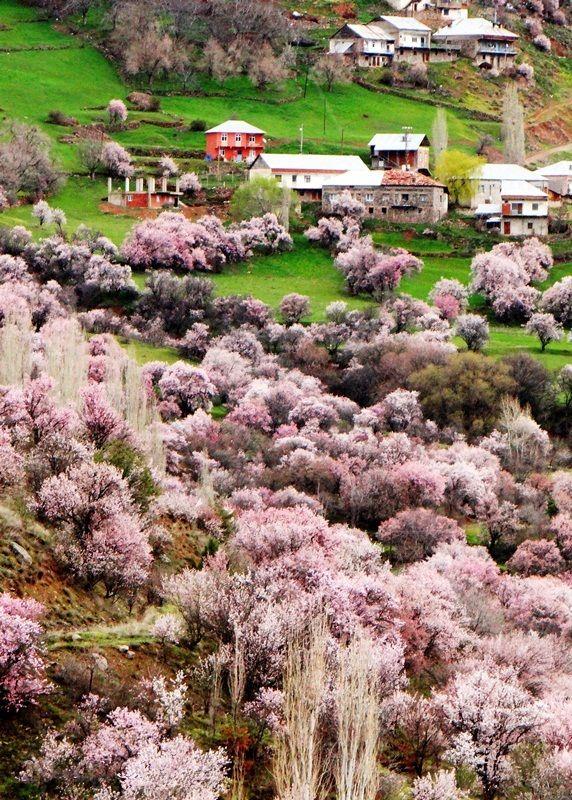 Spring at Erzurum by hay_kes...Erzurum Bademli Willage/Turkey