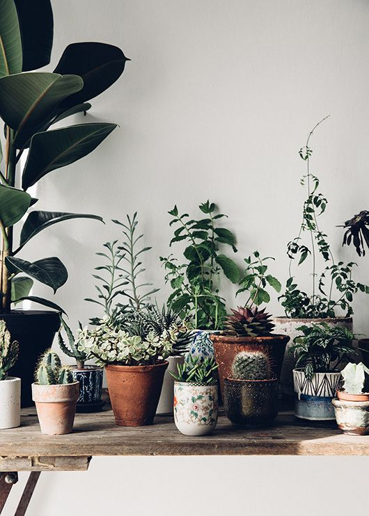potted plants on rustic wood table in creative workspace of the future kept. / sfgirlbybay
