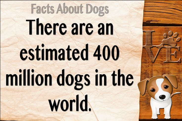 Dog Facts dogs facts Dog facts, Facts, Cute dogs