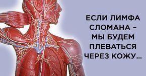 Лимфатическая система – одна из самых сложных и хитро устроенных систем человека. Лимфатическая система управляет всей…