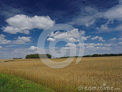 Idyllic view on field in summer