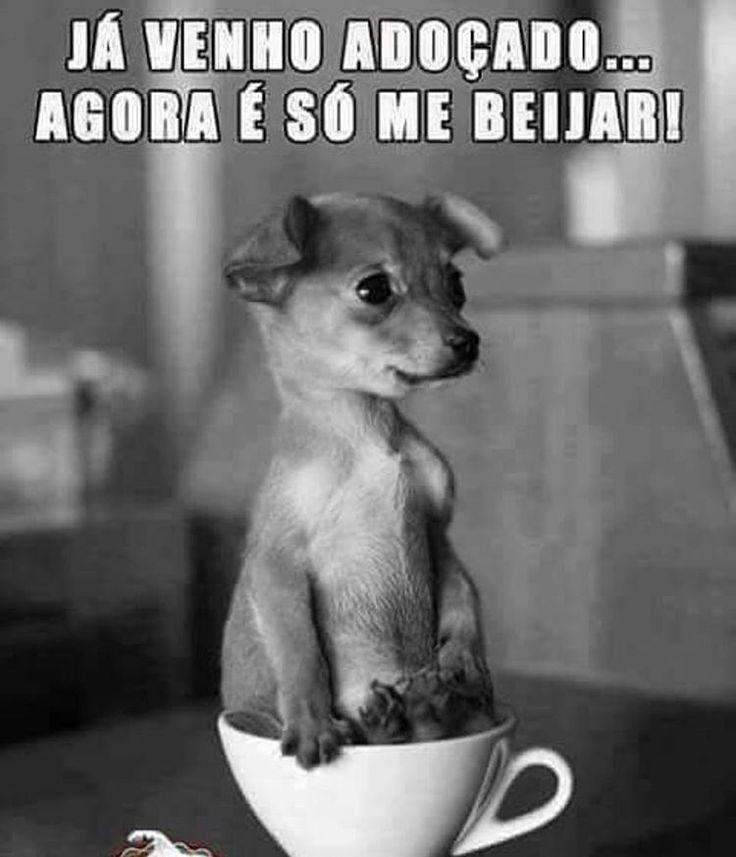 BOM SÁBADO A TODOS!!! ❤️❤️❤️ #amocachorro #amoanimais #bomdia #cachorro #gato #amogato #sabado