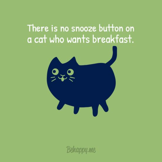 Only cat owners will understand. :D