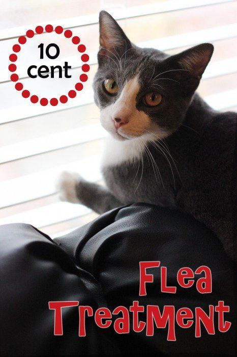 Flea remedies for cats and dogs don't have to be toxic! Learn the natural way to get rid of fleas on cats. Best of all it's a cheap flea treatment too!