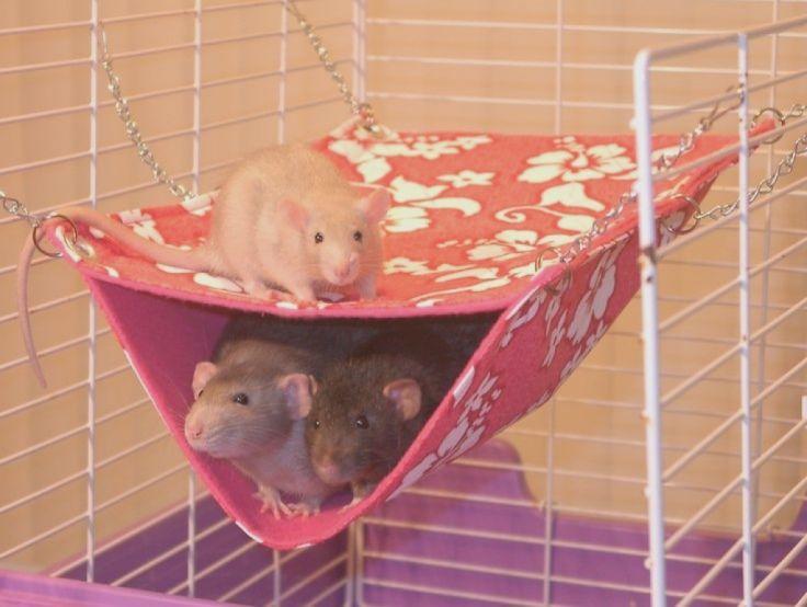 Image Result For Diy Rat Hammock Pet Hammock Baby Rats Pet Rat Cages